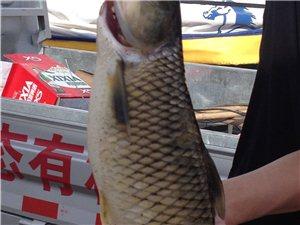 紫泥湖游樂園,野生魚,螃蟹,特色魚宴等