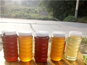 2014年新鮮農家純天然槐花蜂蜜,自產自銷