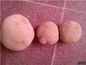 大量出售软质土豆,