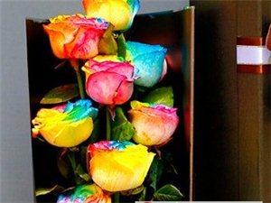 进口永生花保鲜花各种礼盒太阳城赌场批发