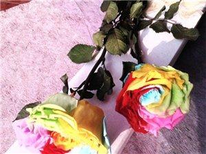 巨型永生花整枝彩虹玫瑰保鲜花情人节生日节日礼盒包邮