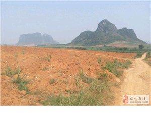 太平镇 20亩红沙地出租