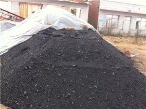 出售白山焦煤面