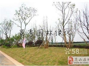 收购苏州地区香樟树榉树朴树广玉兰树等绿化树