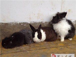 便宜处理几只宠物猫猫兔和狮子兔,要的联系本市内送货上门 -