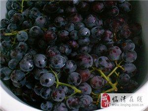 自酿原浆葡萄酒