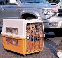 外地領養新寵物寵物托運公司來幫你