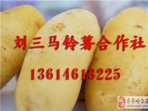 黑龙江马铃薯价格13614613225