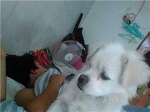 寵物狗丟失