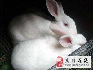 縣城內一獺兔養殖場對外轉讓