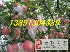陜西地窖膜袋紅富士蘋果價格行情