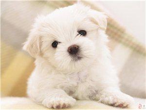 给我的爱犬找个爱心主人!