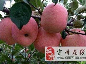出售各类绿化、水果树苗