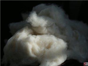泓葉羊絨制品收購 銷售 無毛絨