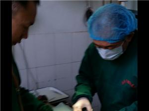 新郑市动物医院
