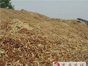 大量出售优质玉米芯、玉米芯颗粒、蘑菇种