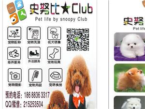 出售小宠物狗5个泰迪宝宝2个