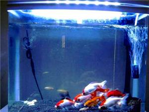 迷你生態魚缸-每月只用5度電!節能魚缸
