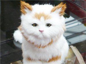 轉贈一只小貓咪朋友家的