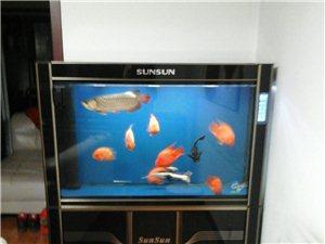 出售《sensen》魚缸