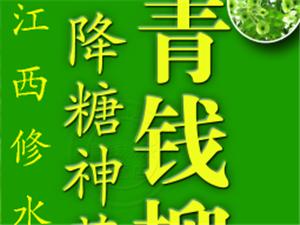 """修水青钱柳——被誉为""""植物界的大熊猫""""人类健康的第"""