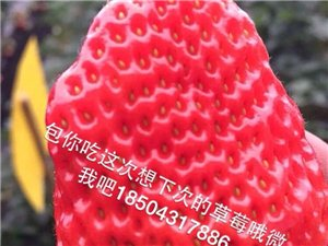 批发丹东美味可口的草莓