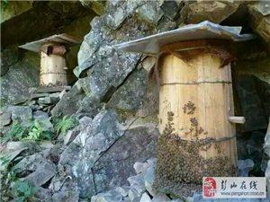 高山野蜂蜜