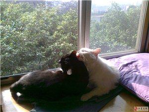 爱猫人士看过来——美貌猫咪求领养