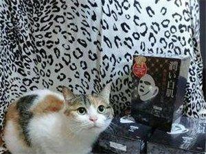 心爱猫猫因个人原因转让了