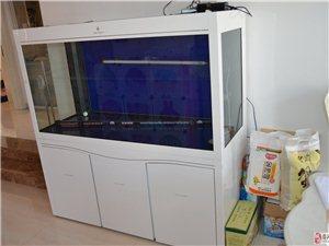 可丽爱9成新鱼缸及全套养龙设备低价出