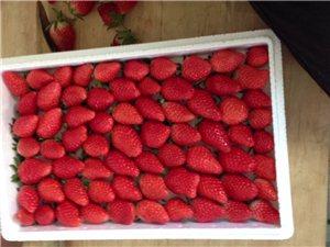 無公害不催熟大棚草莓采摘,味香甜,量大可送貨上門