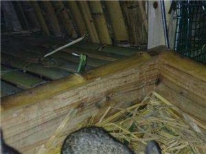 寻乌晨光金龙兔场,长期提供绿色肉兔、种兔,传统养殖