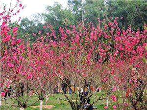 春季踏青 来豫星看桃花了
