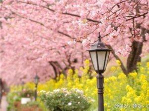 春游赏花,尽在长葛市第二届桃花节