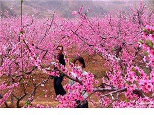 春游哪里去 就来长葛桃花节