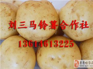 黑龙江讷河马铃薯13614613225代办