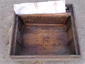 正宗土蜂蜜出售