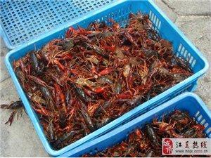 江夏小龙虾养殖基地供应小龙虾