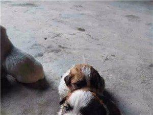 妈妈去世了,谁要我们,我们是小狗狗