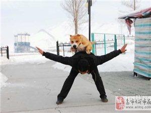 尊寵俱樂部寵物訓練-3000元