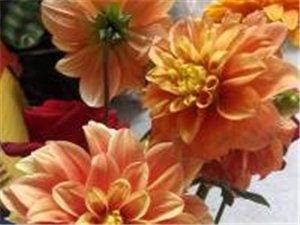 兴荣花卉基地为您增添色彩