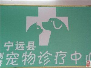 宁远县剑桥宠物诊疗中心出售泰迪幼犬