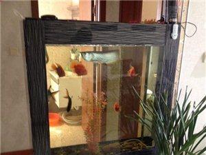 因龙鱼长大了换缸 壁挂式鱼缸出售