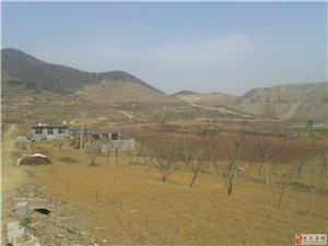 岱岳區道朗北部山區神龍大峽山林果園對外承包轉讓