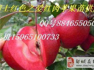 山東鄒城紅肉蘋果苗瑞士紅色之愛蘋果苗未來發展前景