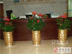 花卉、盆栽、花籃花束、辦公室綠植租擺、工廠綠化