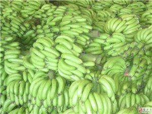海南香蕉王一箱起卖