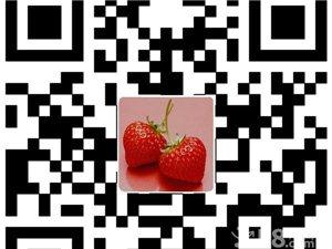 三江草莓采摘