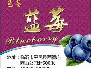 邑莓园蓝莓批发