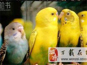 鸚鵡出售,自家繁殖,便宜出售